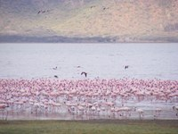 Flamingos, microbes and more in Africa's Great Rift Valley